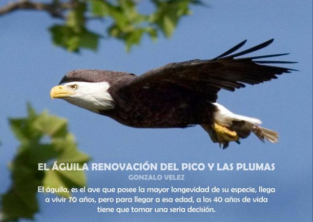 El águila Renovación Del Pico Y Las Plumas