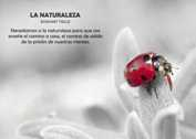 La naturaleza - Graficos Mini