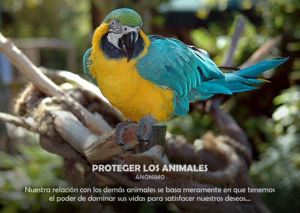 Proteger los animales - Escrito por Tom Regan