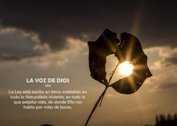 Voz de Dios - La Iluminación